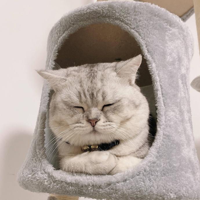 我家的猫十三斤于2021-10-18 09:12发布的图片